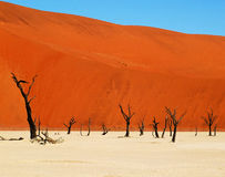 Deadvlei - Namib Desert. Deadvlei surrounded by some of the highest sand dunes in the world, Namib-Naukluft Park in Namibia Stock Images