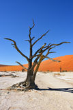 Deadvlei, Namib-Naukluft National Park, Namibia, Africa. Dead Camelthorn Trees against blue sky in Deadvlei, Sossusvlei. Namib-Naukluft National Park, Namibia stock photography