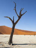 Deadvlei. In the Namib Naukluft National Park, Sesriem, Namibia Royalty Free Stock Photography