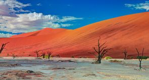 Deadvlei in Namib-Naukluft national park Sossusvlei, Namibia. Deadvlei in Namib-Naukluft national park Sossusvlei in Namibia stock photography