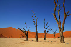 Deadvlei Namib-Naukluft nationalpark Namibia Royaltyfri Bild