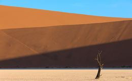 Deadvlei, Namib Naukluft Park in Namibia Royalty Free Stock Images