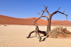 Deadvlei, Namib pustynia Fotografia Royalty Free