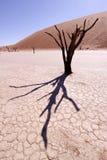 Deadvlei, Namibië Stock Afbeeldingen