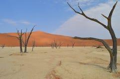 Deadvlei Namibië Stock Afbeeldingen