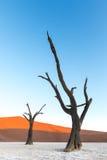 Deadvlei, Namibië Stock Foto's
