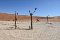 Deadvlei - Namibië - 2017 Royalty-vrije Stock Afbeelding