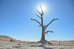 Deadvlei - Namibië - 2017 Royalty-vrije Stock Foto