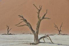 Deadvlei - Namibië - 2017 Stock Foto