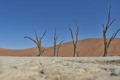 Deadvlei - Namibië - 2017 Stock Afbeelding