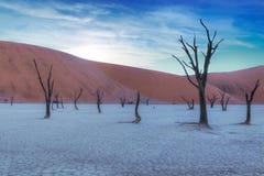 Deadvlei in Namibia. Trees in Deadvlei, Namibia, Africa stock photo