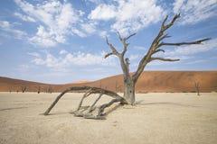 Deadvlei Namibia arkivfoto