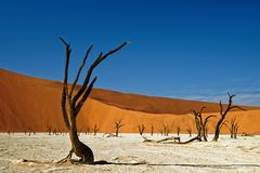 Deadvlei Namibia dead trees. Deadvlei Namibia, Southern Africa, surreal landscape of dead trees preserved on a salt pan stock images