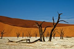 Deadvlei Namibia dead trees. Deadvlei Namibia, Southern Africa, surreal landscape of dead trees preserved on a salt pan stock image