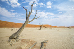 Deadvlei Namibia Royalty Free Stock Image
