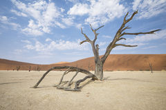 Deadvlei Namibia Stock Photo