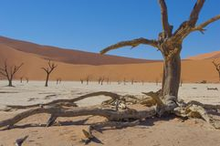 Deadvlei, Namibia, Namib-Naukluft National park. Landscape picture of the deadvlei in the Namib desert. Part of the Namib-Naukluft National park Stock Image