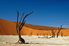 Deadvlei Namibia nieżywi drzewa obrazy stock