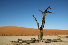 Deadvlei in Namibian woestijn Stock Foto