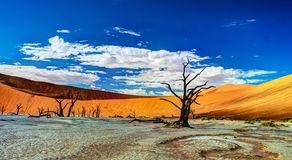 Deadvlei in Nationalpark Namib-Naukluft, Sossusvlei, Namibia Stockfotografie