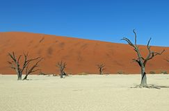 Deadvlei in Naukluft Park in de Namib Desert in Namibia. Deadvlei is a white clay pan located near the more famous salt pan of Sossusvlei, inside the Namib Stock Photography