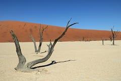 Deadvlei no deserto do de Namib em Namíbia Imagem de Stock
