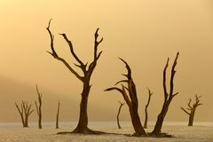 Deadvlei, orange dune with old acacia tree. African landscape from Sossusvlei, Namib desert, Namibia, Southern Africa. Red sand, stock photos