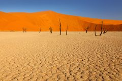 Free Deadvlei, Orange Dune With Old Acacia Tree. African Landscape From Sossusvlei, Namib Desert, Namibia, Southern Africa. Red Sand, Stock Photography - 153750452