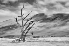 deadvlei osamotniony Namibia kośca drzewo monochrom Zdjęcie Royalty Free