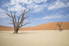 Deadvlei Royalty Free Stock Photos