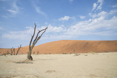 Deadvlei Stock Photos