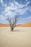 Deadvlei Royalty Free Stock Images