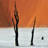 Deadvlei, Sossusvlei Намибия стоковая фотография