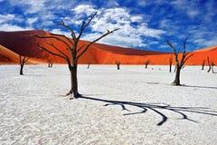 Deadvlei, Sossusvlei Намибия стоковое фото rf