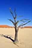 Deadvlei, Sossusvlei Намибия Стоковая Фотография RF