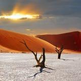 Deadvlei, Sossusvlei Намибия стоковые фото