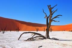 Deadvlei, Sossusvlei Намибия Стоковое Изображение