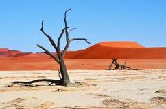 Deadvlei, Sossusvlei Намибия Стоковое Фото