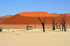 Deadvlei, Sossusvlei Namib-Naukluft park narodowy, Namibia obrazy stock