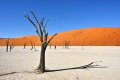 Deadvlei, Sossusvlei Namib-Naukluft park narodowy, Namibia Zdjęcie Royalty Free