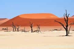 Deadvlei, Sossusvlei Namib-Naukluft park narodowy, Namibia Zdjęcie Stock