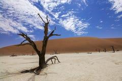 Deadvlei, Sossusvlei, Namibia Fotografia Stock