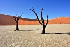 Deadvlei, Sossusvlei Namibia zdjęcie stock
