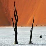 Deadvlei Sossusvlei Namibia Arkivbild