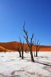 Deadvlei Sossusvlei Namibia Arkivbilder
