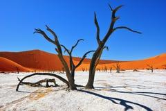 Deadvlei Sossusvlei Namibia Royaltyfri Fotografi