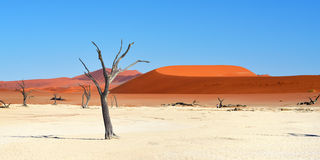 Deadvlei, Sossusvlei Namibia Obrazy Royalty Free
