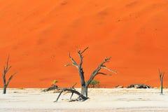 Deadvlei, Sossusvlei Namibia Obraz Stock