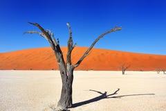 Deadvlei, Sossusvlei namibia Photographie stock