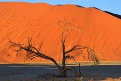 Deadvlei Sossusvlei Namibia Arkivfoton